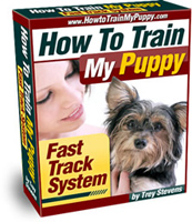 How To Train My Puppy image